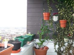 Balcony 11-04-2010 (2)