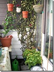 Balcony 11-04-2010 (6)