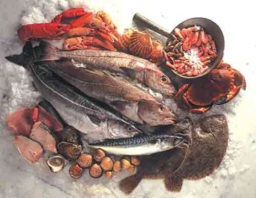 A Seafood Display