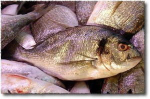 Catch of the Day, Gilthead Bream (Dorade, Royal Bream)